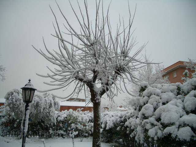 Arbol nevado. Madrid con nieve
