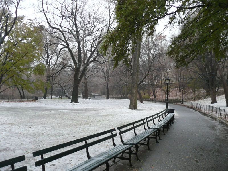 Central Park nevado. Nueva York (USA)