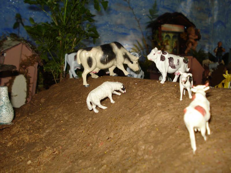 Vacas en las montañas. Belén de carlos alberto jaramillo (Coclé - Panamá)