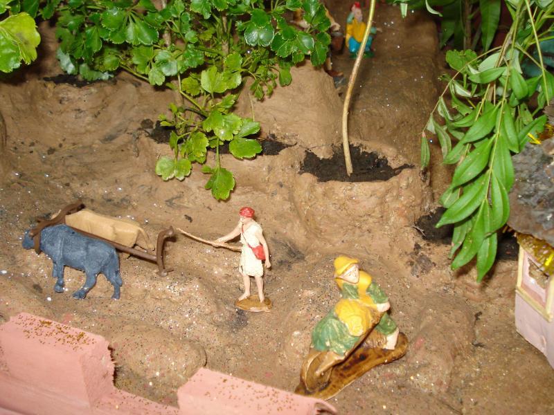 Bueyes arando la tierra - Cosechas. Belén de carlos alberto jaramillo (Coclé - Panamá)