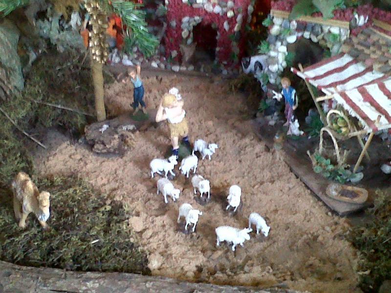 Rebaño de Ovejas.. Belén de Cristhian Castrejón (David, Chiriquí, Panamá)